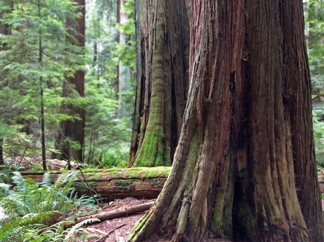 Cedar Giants-LHP