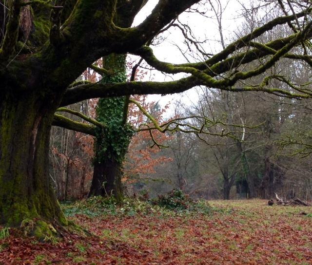 Old tree deer lake park