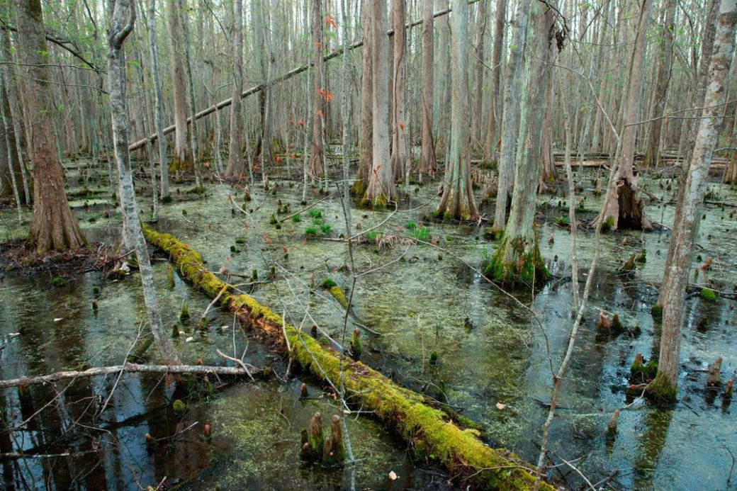 swampy trees and moss