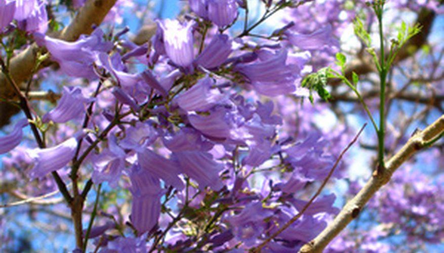 Vishna flowers