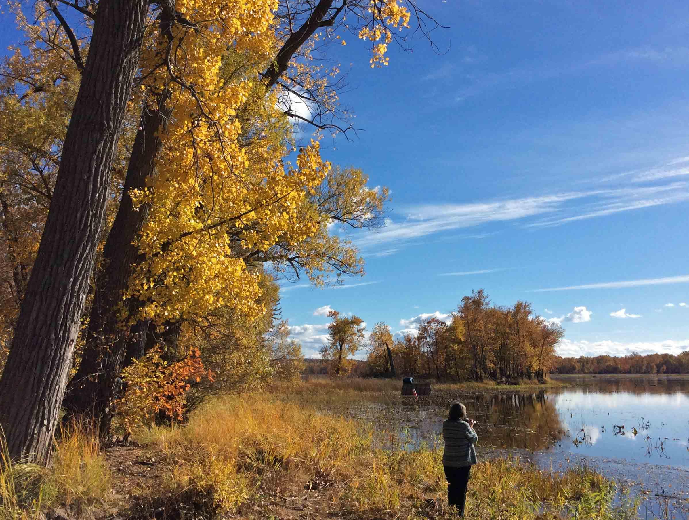 Merridy-LakeChamplain marsh