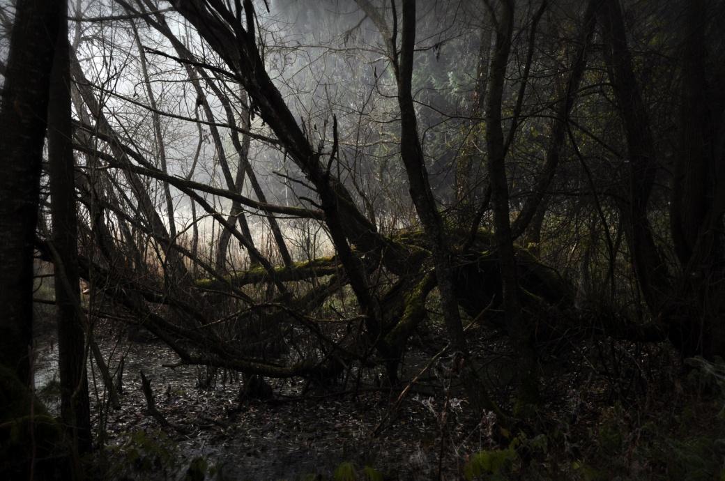 dark swamp 2