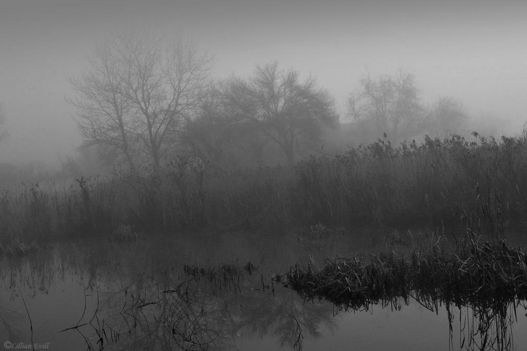 dark swamp3