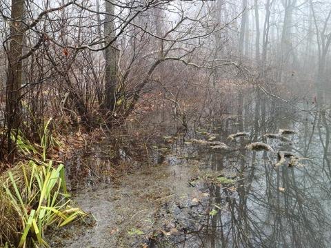 K.RoseLake-swamp
