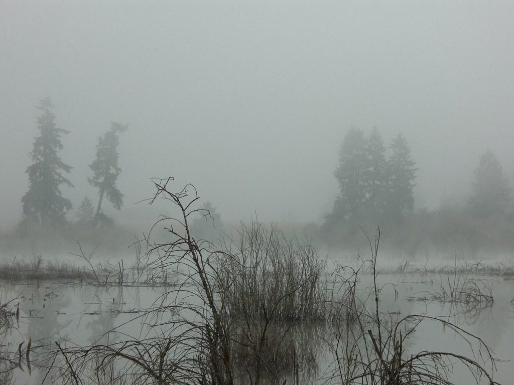 misty marsh trees