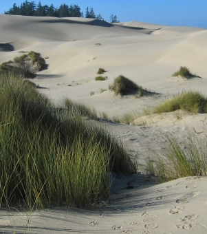 Sand dunes Oregon3