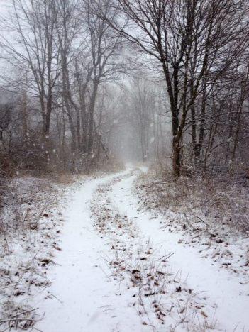 Snowy Path scarborough