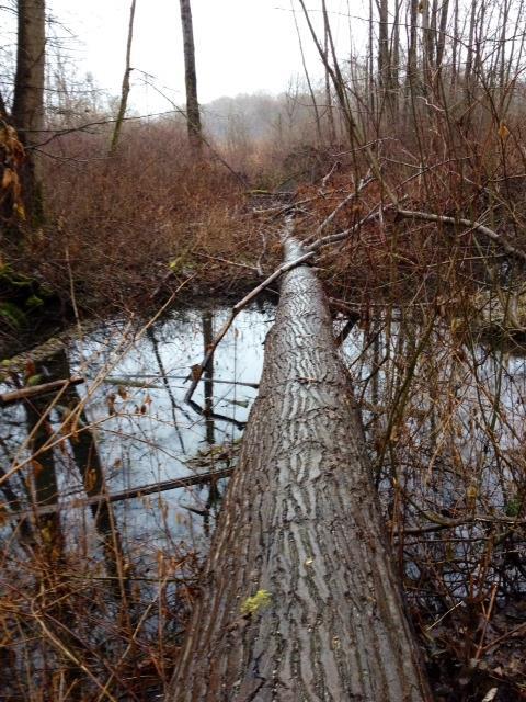 Swamp-Log-DeasPark