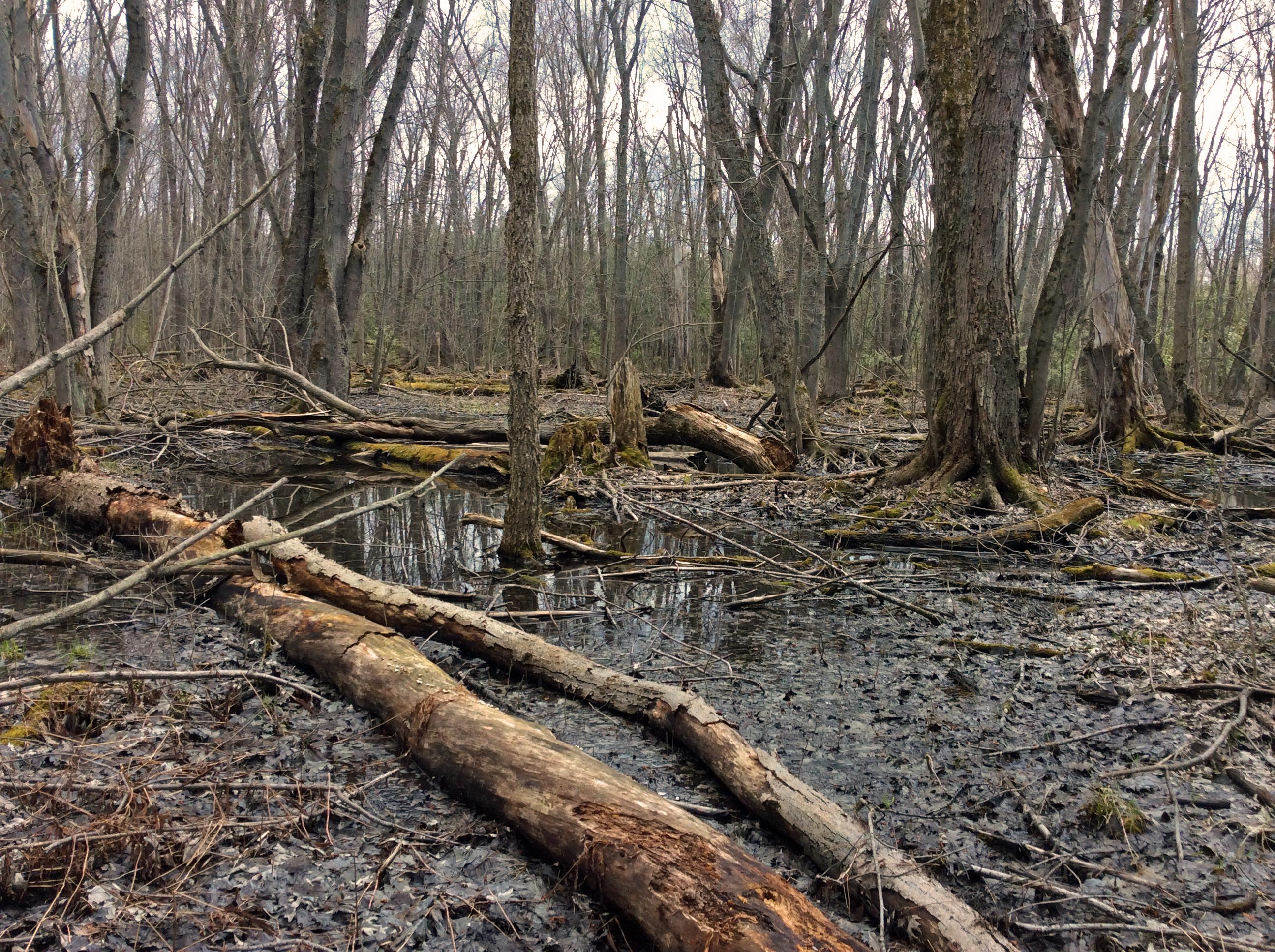 Swamp03 TNS