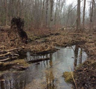 Wetland-Trent3