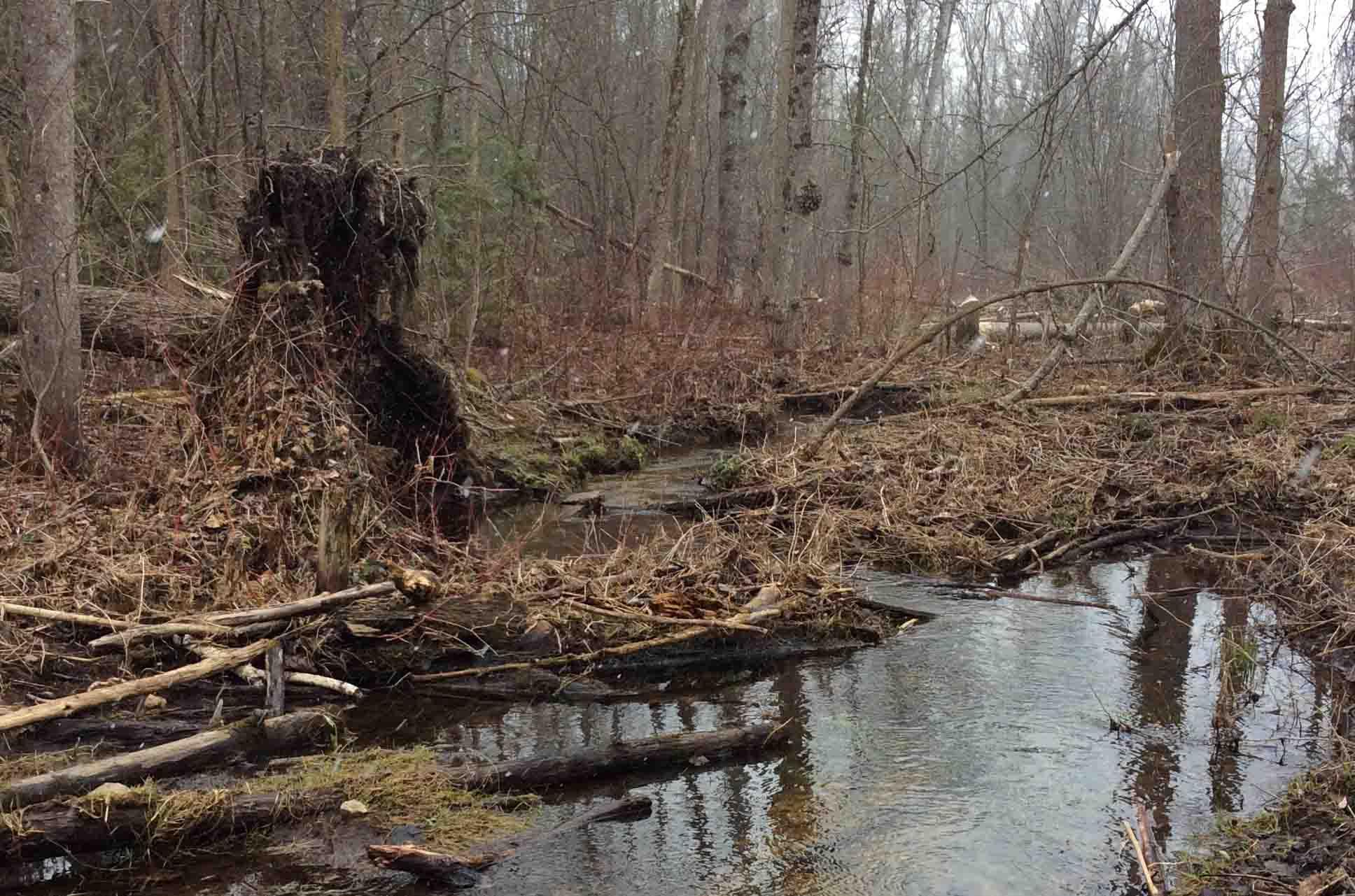 Wetland-Trent6