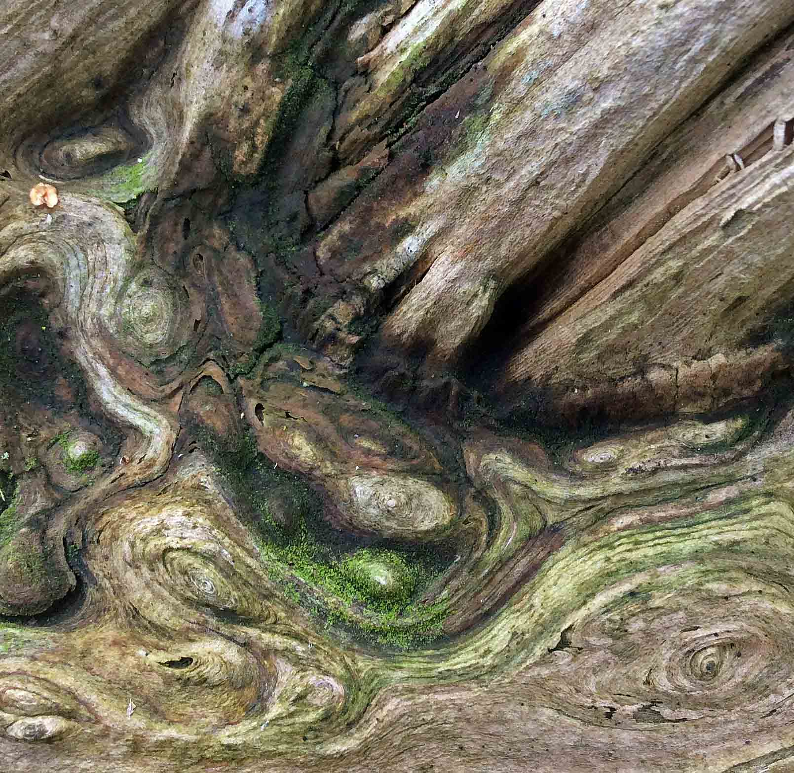 cedar log patterns2 copy