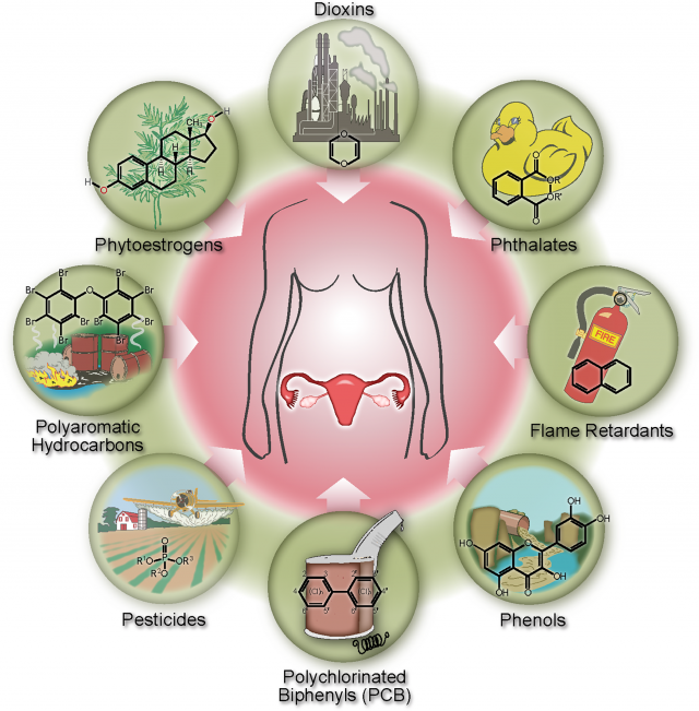 common endocrine disruptors