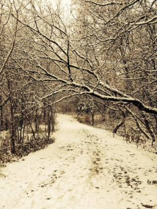 Credit Riv path in snow