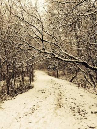 Credit Riv path in snow