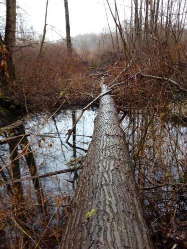 Log over water forest-DeasPark