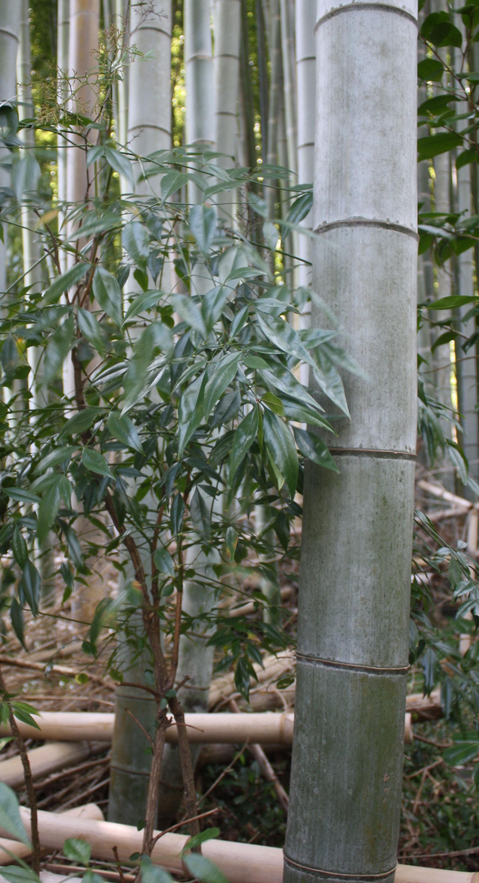 bamboo-close01 copy