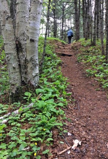 Path birch PPP