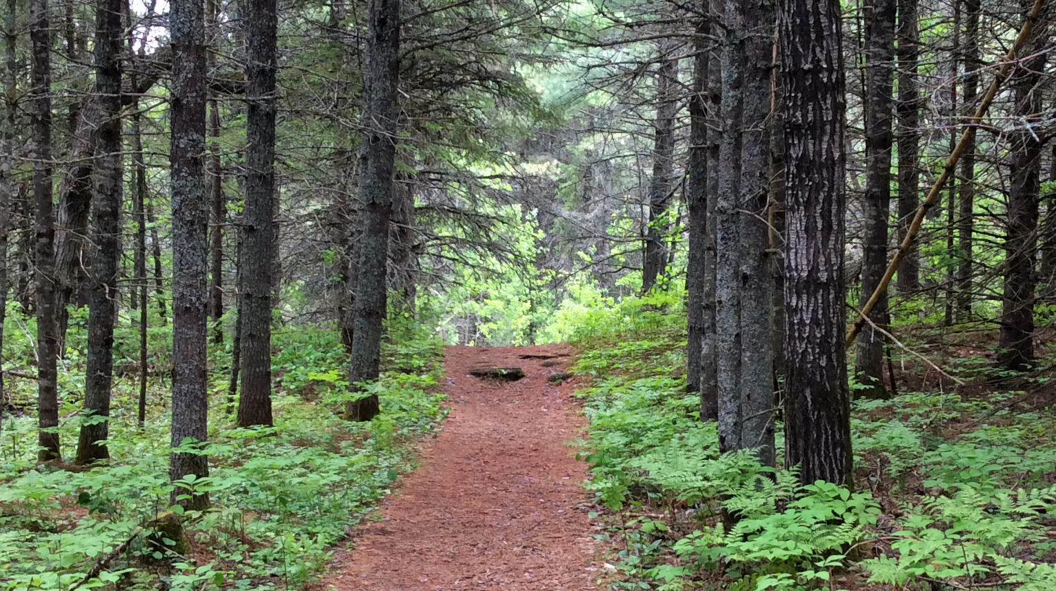 Path pine forest wide PPP