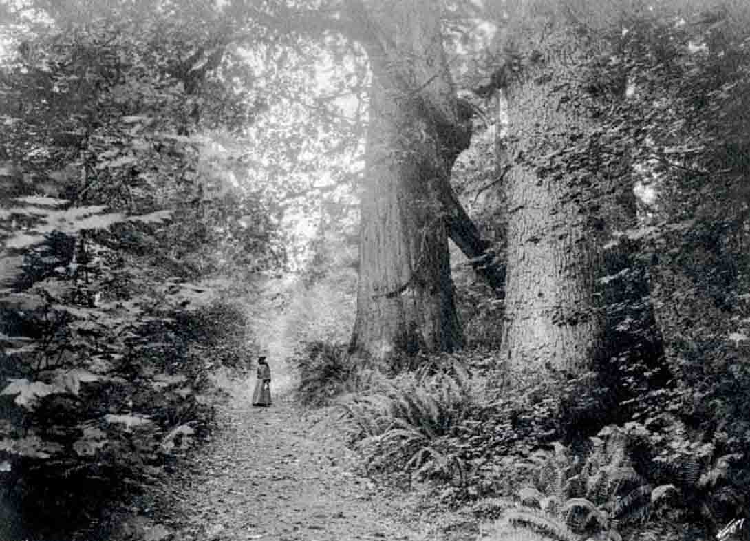 Victorian woman giant trees 1901