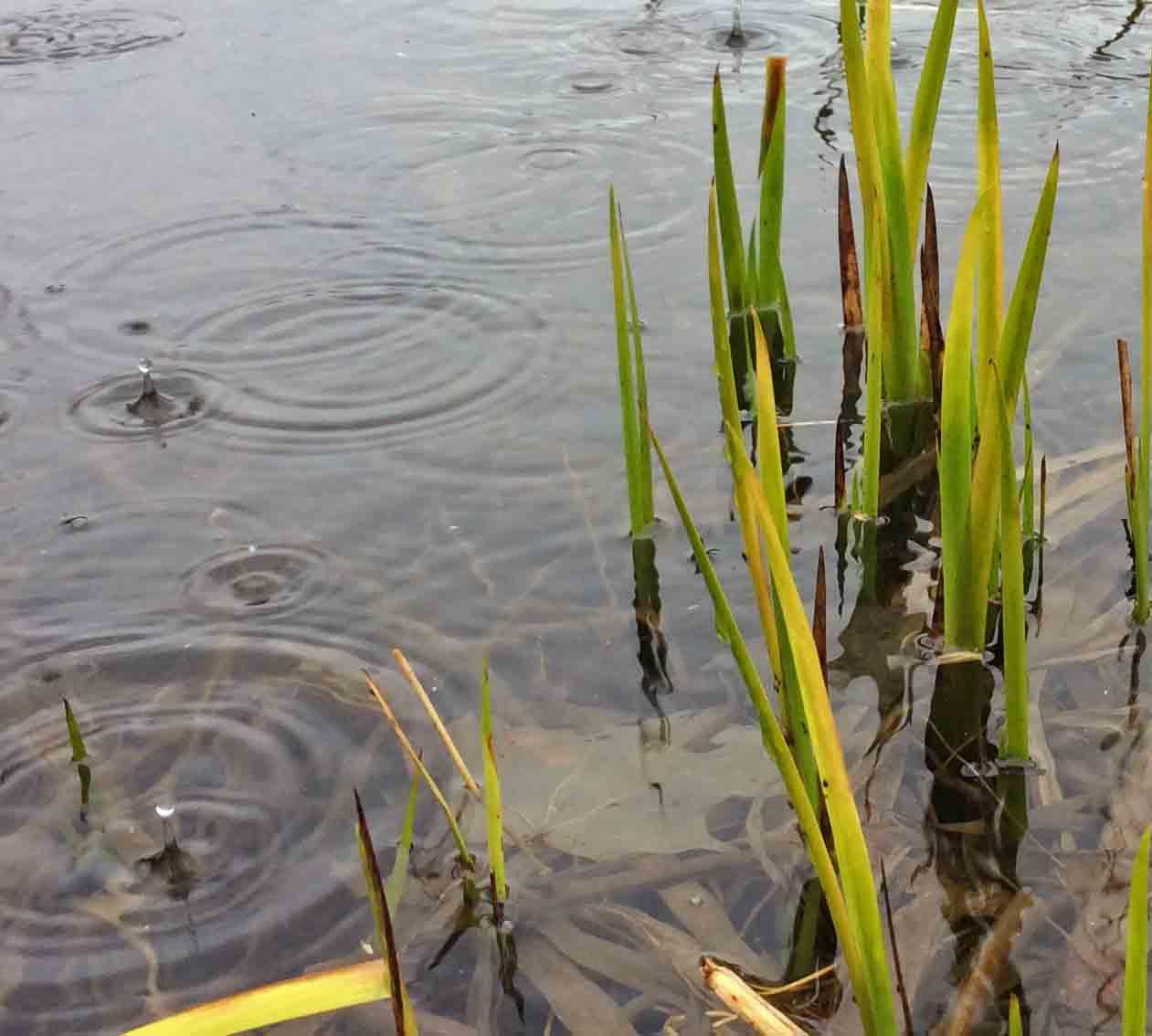 Water rain reeds 10 Pb