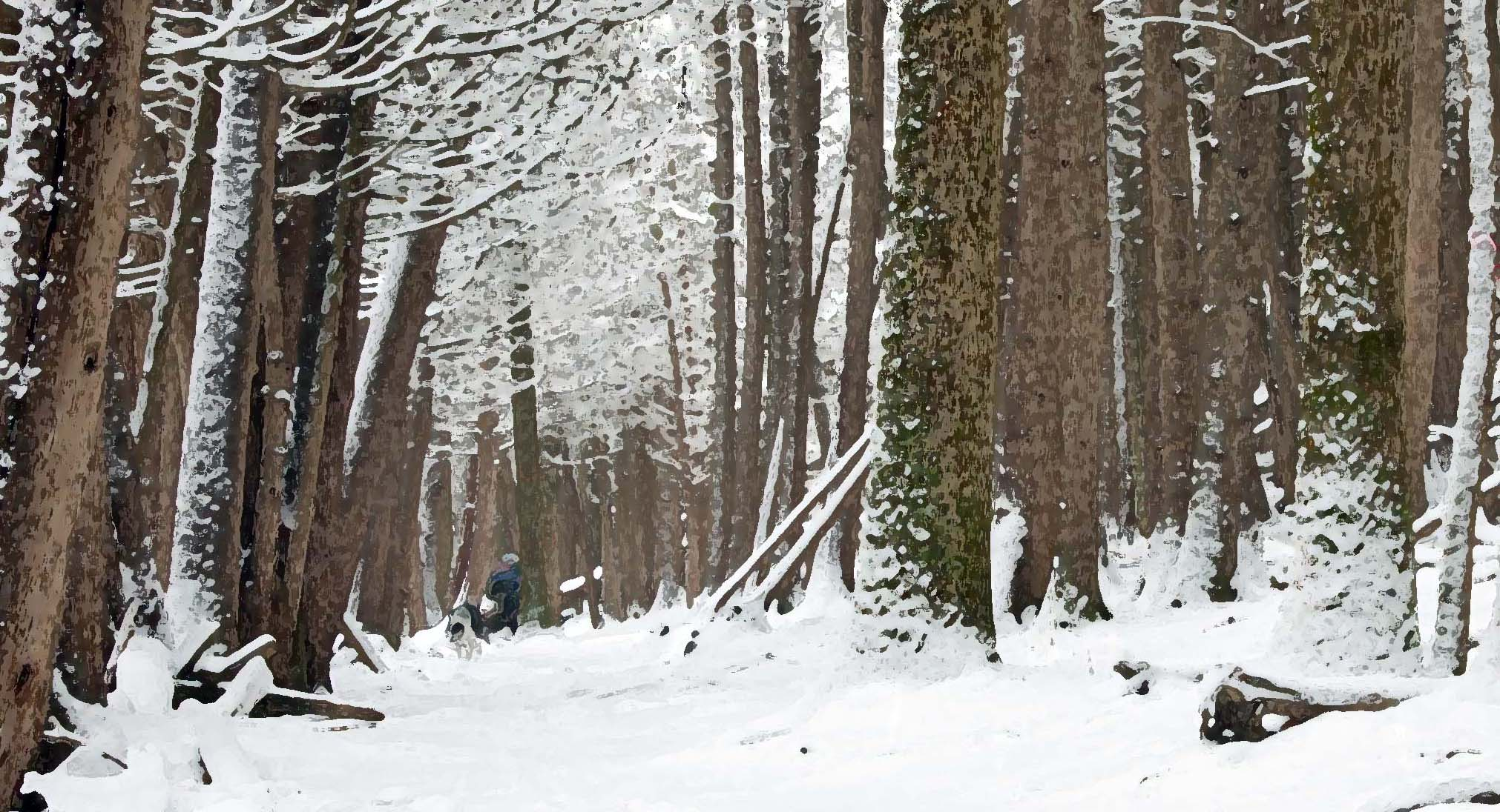 Nature as Poet … The Forest in Winter